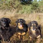 Bredlir, Akka en Lotte
