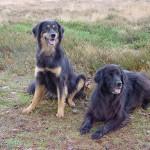 Akka en Nika